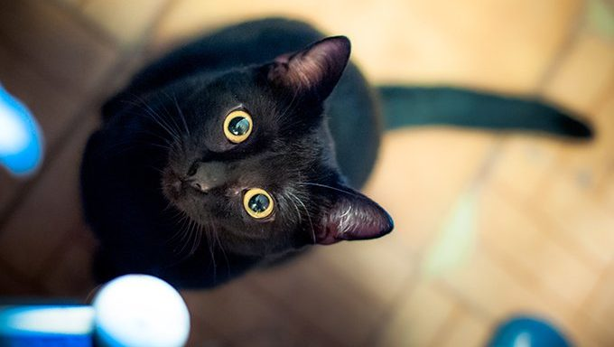 black cat with wide eyes looking up