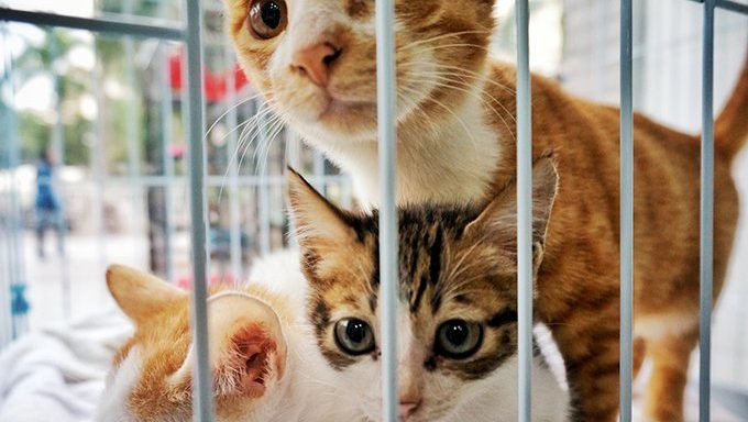 shelter cats in cage