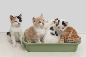 7 Tips For Controlling A Stinky Litter Box