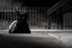 Protect Black Cats This Halloween