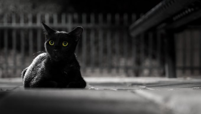black cat lying in front of fence outside