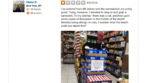 Internet Strikes Back At Bodega Cat Hater Who Left Mean Yelp Review