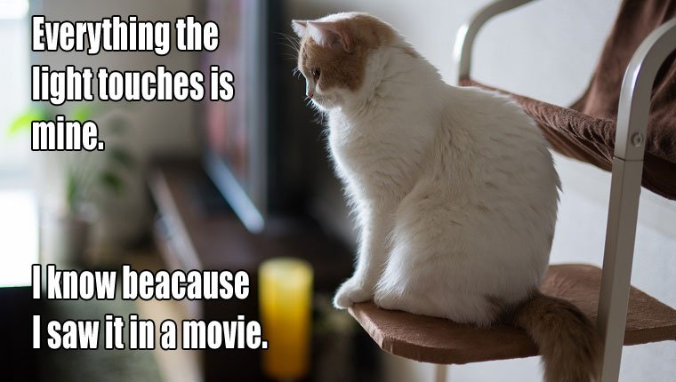 cat-owners-know-8