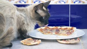 10 Photos No One Wants To See Of Your Cat