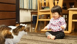 10 Things Cat Parents Think But Don't Say To Parents Of Children