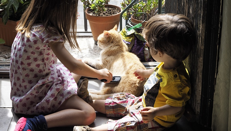 Two children (6 and 2 years) brushing a yellow cat at home.
