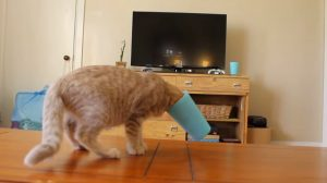 Kitten Learning About Cups [VIDEO]
