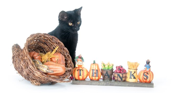 Black cat sitting next to cornucopia and thanksgiving sign.