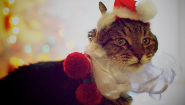 Close-Up Of Cat Dressed As Santa Claus