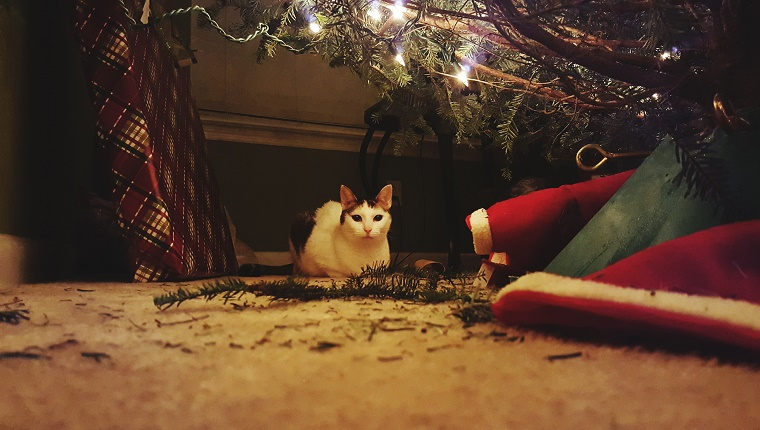Surface Level View Of Cat Sitting By Christmas Presents At Home