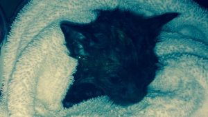 Kitten Rescued From Sewer With Water Pressure And A Net