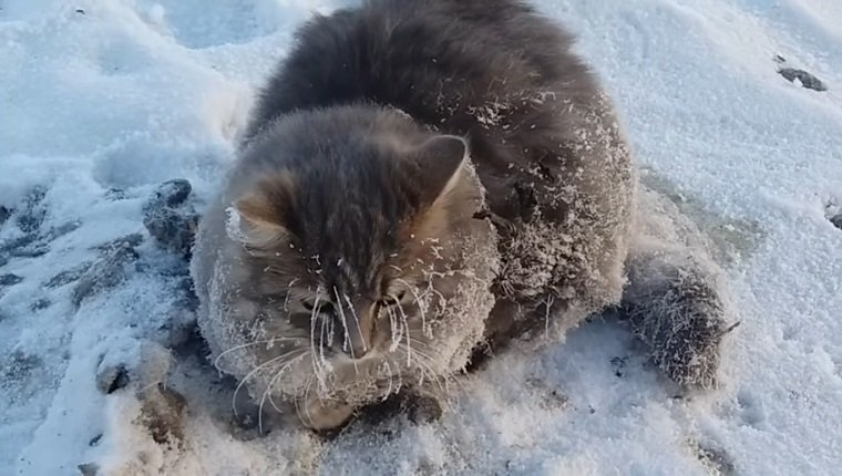 cat-paws-frozen-ground-1