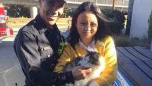 Cat Survives Highway Ride In Car's Engine Compartment