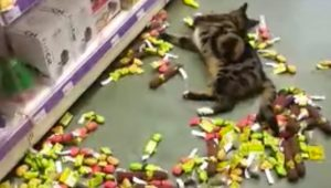 Runaway Cat Wanders Into Pet Store Goes Crazy In Catnip Aisle
