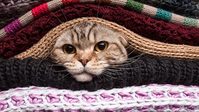 cat hiding in folded blankets