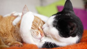 Cuddle That Kitty For National Cuddle Up Day On January 6th