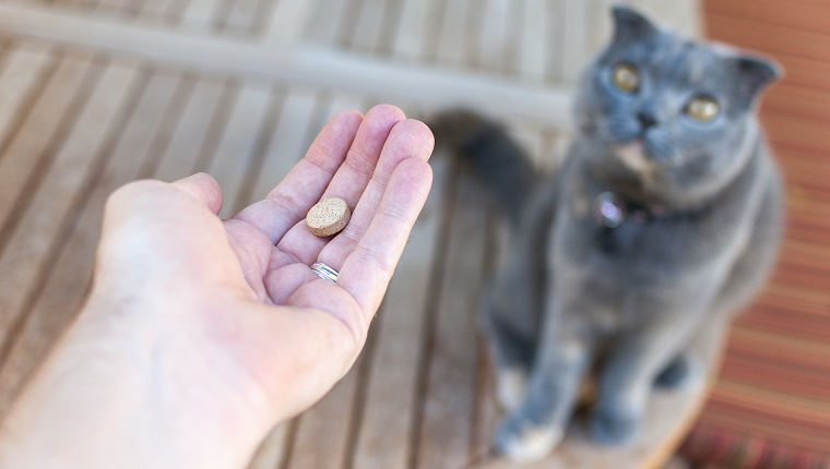 A pet owner's hand can be seen reaching out to give his cat a pill/tablet. The photo was taken from the pet owner's perspective, looking down at his Scottish Fold cat, who is expectendly looking up, and patiently waiting for her medication.