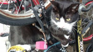 Cat Caught In Mountain Bike Frame Gets Rescued