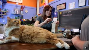 8 Hero Cats Who Saved Their Owners' Lives