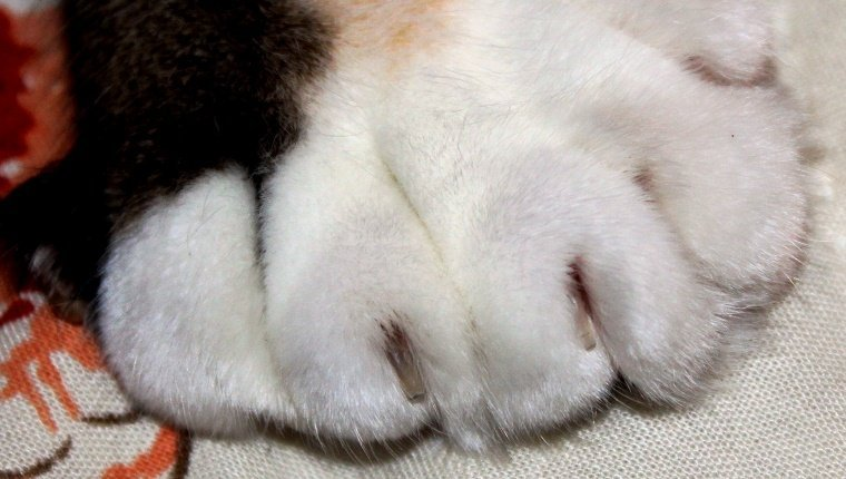 Polydactyl Cat Names Female