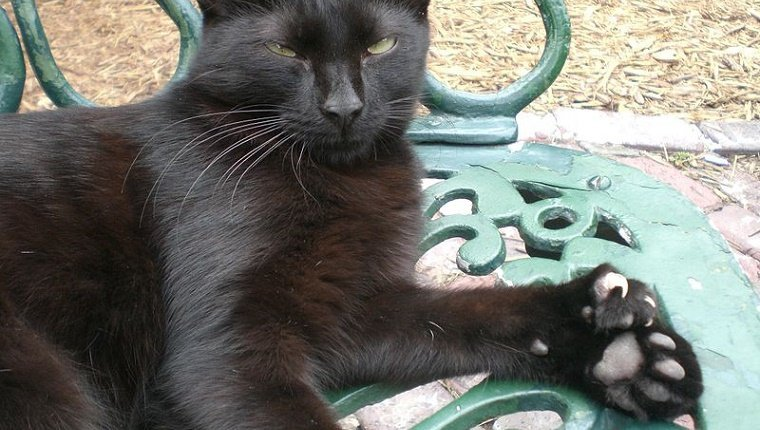 polydactyl-cats-3