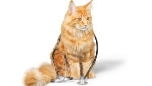 10 Jobs Cats Could Do Better Than Humans