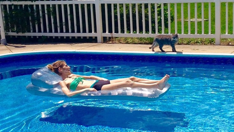 Woman Looking At Cat While Lying On Inflatable Raft In Swimming Pool