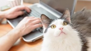 7 Dream Jobs For Cat Lovers
