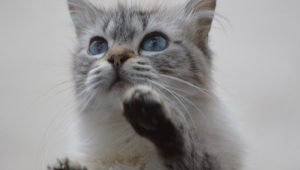 How To Reduce Separation Anxiety In Cats