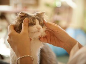 How To Give Your Cat The Best Massage Ever