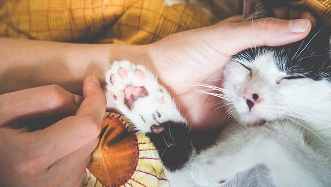 human petting cats face and paws