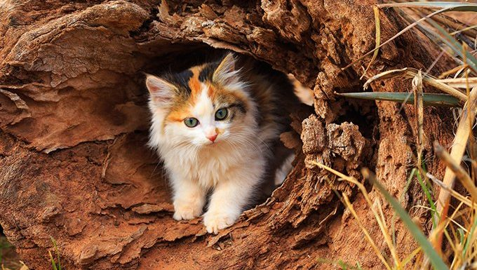 calico cat in log