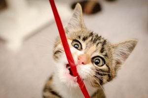 Ribbon And Cats: How Dangerous Is Ribbon?