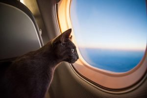 How To Travel With Your Cat: Flying With Your Cat