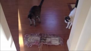 Cats Vs. Brooms [VIDEO]