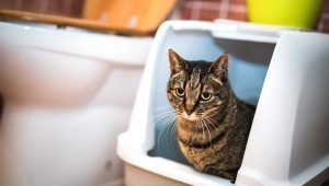 Diarrhea In Cats: Symptoms, Causes, And Treatments
