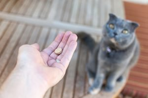 Prednisone For Cats: Uses, Dosage, & Side Effects