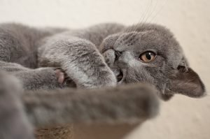 Quiet Cat: Breeds That Are Quiet & Training Your Cat To Be Quiet