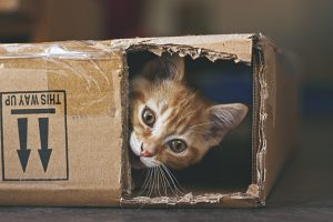 Schrödinger's Cat: What Is It?