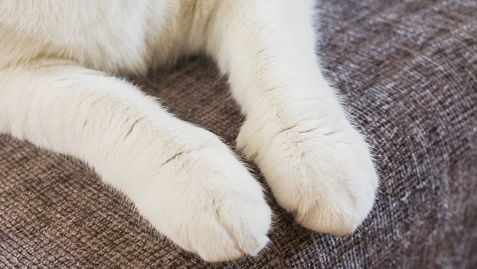 cat paws on sofa cushion