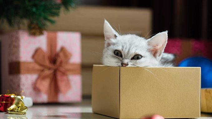 cat in box by christmas tree