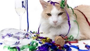 Happy New Year! Funny Cats Sing 'Auld Lang Syne'
