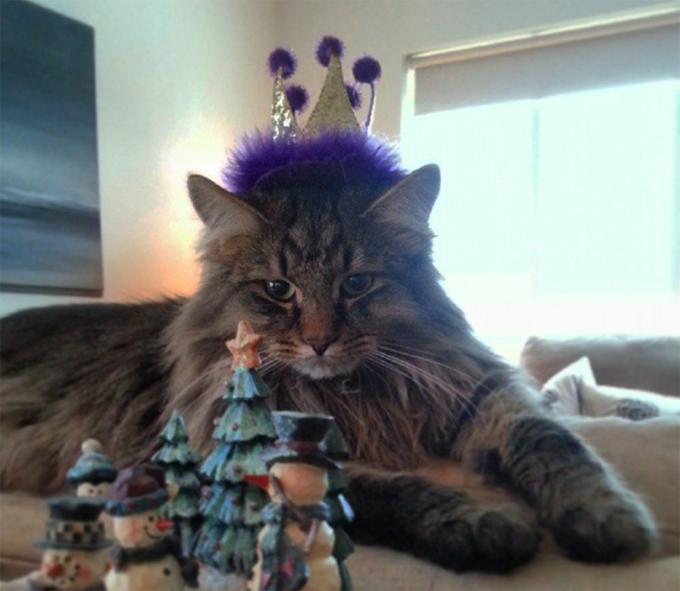 30 Cat's Ringing In The New Year In Style - CatTime