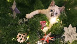 10 Cats Who Love Christmas Trees [VIDEOS]