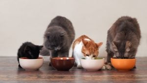 How To Make Homemade Cat Food