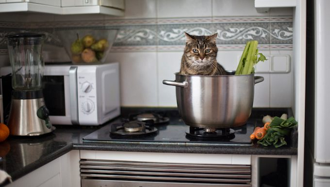 cat sitting in pot with vegetables