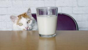 Lactose Intolerance: Why Milk Is Bad For Cats