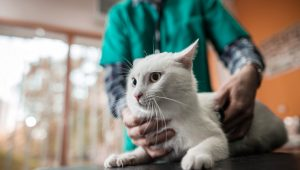Top 5 Benefits Of Choosing A Mobile Veterinarian