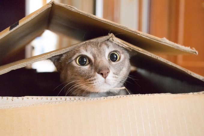 Are Cats Smart Enough To Find Their Way Home