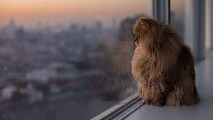 cat looks out the window